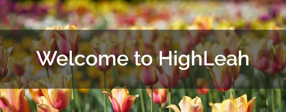 Welcome to HighLeah